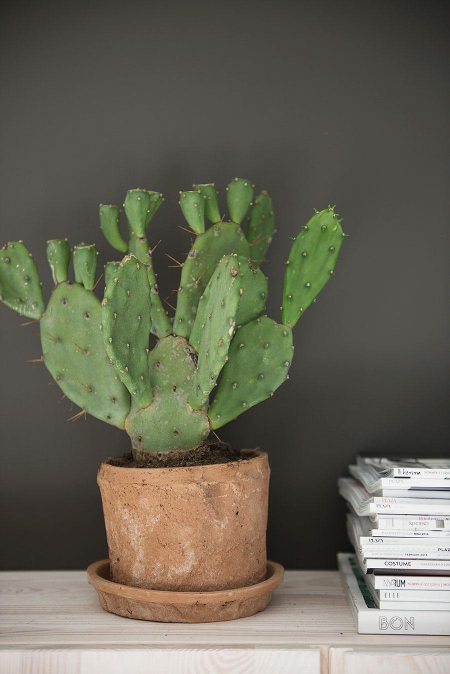 kaktus-terracotta